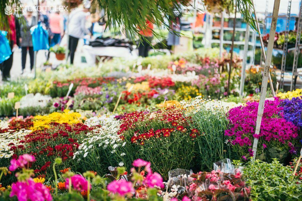 Pestrofarebná výstava Gardenia